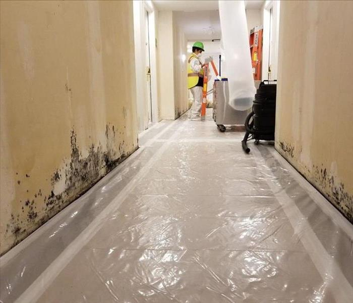 Mold Remediation Hotel Mold