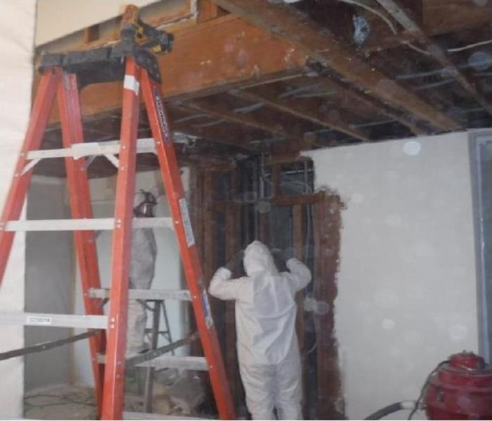 Mold Remediation Mold Busters!