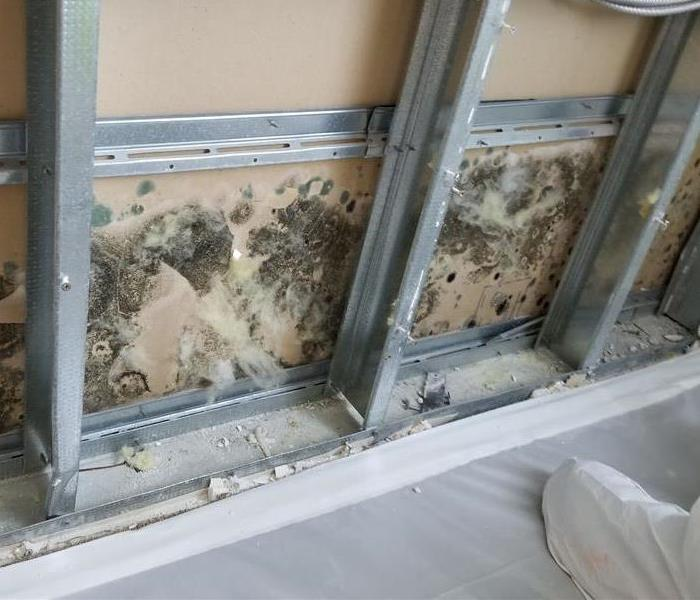 Mold Remediation Encino/Sherman Oaks Residents:  Follow These Mold Safety Tips If You Suspect Mold